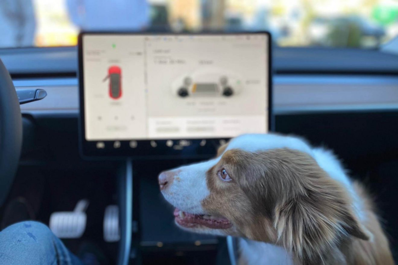 Tesla Model Y Innen Hund